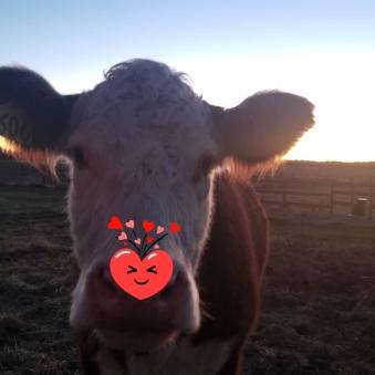 Valentine Picture